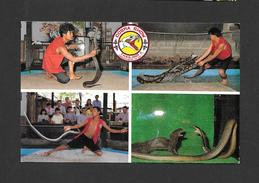ANIMALS - ANIMAUX - COBRA SHOW AT DAMNOENSADUAK FLOATING MARKET RATCHABURI AND AT PATTAYA CITY THAILAND - Animaux & Faune