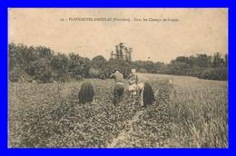 Plougastel Daoulas * Dans Les Champs De Fraises   ( Scan Recto Et Verso ) - Plougastel-Daoulas