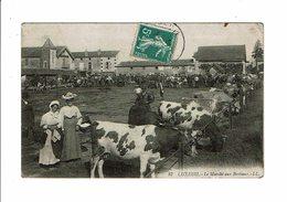 Cpa LUXEUIL LES BAINS Le Marché Aux Bestiaux Femmes à La Pose Vaches  LL 87 - Luxeuil Les Bains