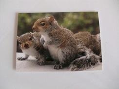 Squirrel Ecureuil Esquilo Pocket Calendar 2017 - Calendriers