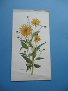 Postcard PRO JUVENTUTE - Flowers