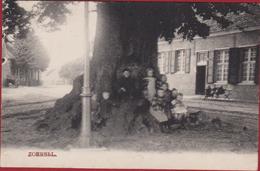 Oude Postkaart Zoersel Eeuwenoude Linde Lindeboom (Postkaart In Zeer Goede Staat, Opname Onscherp) Lindenboom Kempen - Zoersel