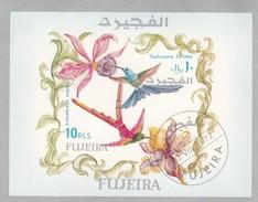 FUJEIRA - BLOC  OISEAUX - COLIBRI - THALURANIA FURCATA - 10.8.1972  / 6584
