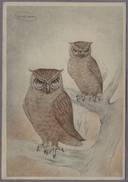 """Artist Signed By """"Swildens"""" Vögel - Eule, Uhu, Oehoe, Hibou - Owl   751j - Otros Ilustradores"""
