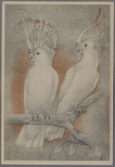 """Artist Signed By """"Swildens"""" Of Two Cockatoos   D790 - Pájaros"""