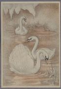 "Artist Signed By ""Swildens""  Les Cygnes - Swans  D791 - Otros Ilustradores"