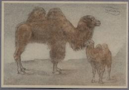 """Artist Signed By """"Swildens""""  Camel   D793 - Otros Ilustradores"""