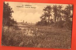 IBW-21  Sénégal Tiaroyb  Bord Du Marigot. Circulé En 1924 Vers La Suisse - Senegal