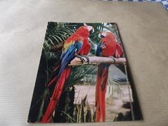 CP Oiseaux Aras - Oiseaux