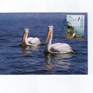 Macedonia 2004 Nature Protection, Prespa Lake, Fauna, Birds, Pelican MC