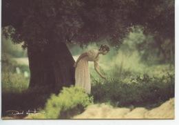 David Hamilton - Ed Agep N°72 Cp Vierge (sous L'arbre) - Künstlerkarten