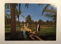 AK  KUWAIT   A GREEN FARM  IN  KUWAIT - Koweït