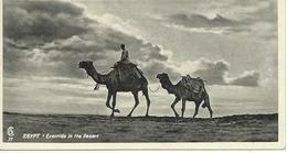 Egypt Eventide In The Desert - Egypte