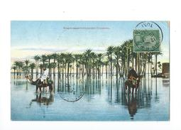 Tunisie Bouquets De Palmiers Pendant L'inondation 1911 - Tunisie