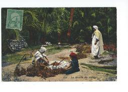 Tunisie La Récolte De Dattes 1912 - Tunisie