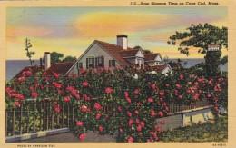 Massachusetts Cape Cod Rose Blossom Time 1956 Curteich - Cape Cod