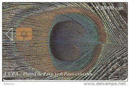 CUBA - Pluma De Pavo Real Pavo Cristatus, Tirage 30000, 10/00, Used - Cuba