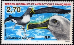 BIRDS-MARINE BIRDS-GREY HEADED ALBATROSS-TAAF-1998-MNH-D4-6