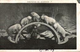 CIRQUE SOUVENIR DE BOSTOCK OURS BLANC - Zirkus