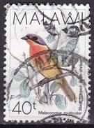 Malawi, 1988 - 40t Black-fronted Bush Shrike - Nr.527 Usato° - Malawi (1964-...)