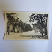 Batna - Avenue De La République - Carte En Superbe état - Batna