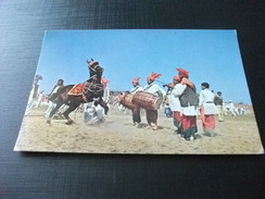 CAVALLO HORSE DANCING SHOW LAHORE PAKISTAN TAMBURI COSTUMI - Pakistan