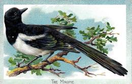[DC9025] CPA - THE MAGPIE - PICA CAUDATA - TUCK´S POST CARD IN RILIEVO - Viaggiata - Old Postcard - Uccelli