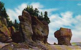 Canada Moncton Rock Formation At Hopewell Cape