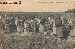 SOLOGNES VENDANGES CUEILLETTE DU RAISIN  45 - France