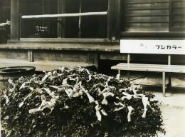 Japon Tokyo? Arbre à Prières Votif Ancienne Photo 1960 - Places