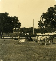 Inde Allahabad Colonne Ashoka Cadran Solaire Ancienne Stereo Photo Kurt Boeck 1906