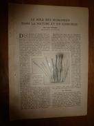 1917 LSELV :Le Rôle Des Muscinées Dans La Nature Et En Chirurgie (par Louis Müller Professeur Honoraire) - Autres Collections