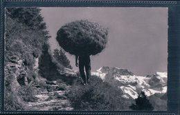 Der Wildheuer, Wildheu, Transport Im Seiltuch (12369) - Elevage