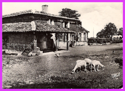 PIBRAC (31) - Maison De Ste-Germaine - Pibrac