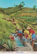 CPM 10X15. ESPAGNE .CANARY ISLANDS . Pastoral Scene (Très Beau Plan De Laveuses Au Lavoir En Plein Air / Berger+moutons) - Espagne