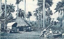 A-17.5633 :   CUBA. PAISAJE CUBANO. CUBAN LANSCAPE - Cuba
