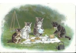 Kat Cat Katzen Chat Wilhelm Boehme - Chats