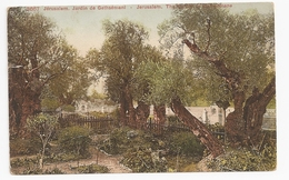 Palestine; Jerusalem. Jardin De Gethsemani.   Dated 1908          (jer01)