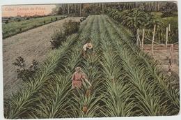 CUBA - CAMPO DE PINAS - PINEAPPLE FIELD - Cuba