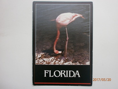 Postcard Florida's Famous Flamingo By Floridian Card Products Of Tampa My Ref B21303 - Birds