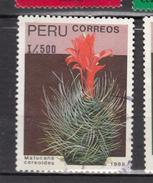 Pérou, Peru, Cactus