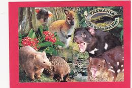 Modern Post Card Of The Wildness State,Tasmania, Australia.,B22. - Wilderness
