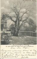Le Gros Chêne De Liernu - Autres