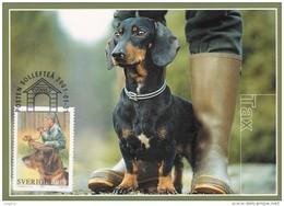 DOGS DOG - DACHSHUND DACKEL BASSOTTO TECKEL PERRO TEJONERO SWEDEN SUEDE SCHWEDEN 2001 MI 2220 MAXIMUM MAXI CARD CARTE - Dogs