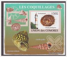 117 Comores 2009 Vuurtoren Lighthouse Shell S/S MNH Imperf