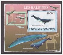 180 Comores 2009 Walvis Whale S/S MNH