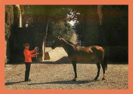 A646 / 191  61 - LE HARAS DU PIN Cheval ALMAZIG - France