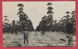 Singapour /  Kubber Estate Singapore ...plantations - 1927  ( See Always Reverse / Voir Verso ) - Singapour