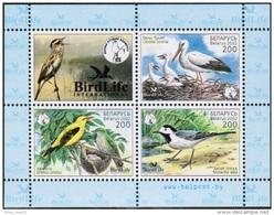 Belarus, 2002, Birds, MNH
