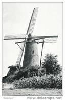 Vinderhoute - Van Vlaenderensmolen - Lovendegem
